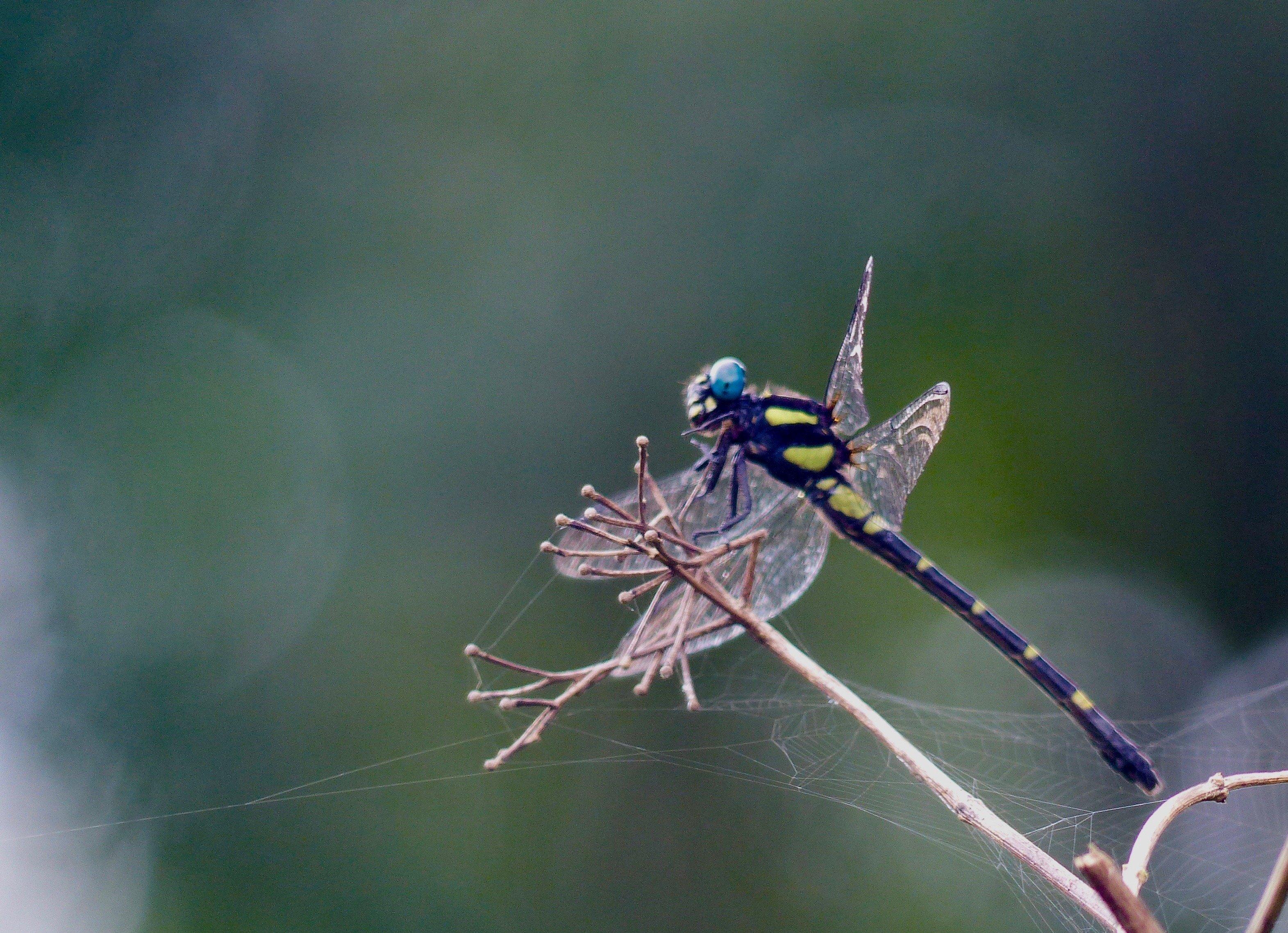 Bhagwan Mahavir wildlife sanctuary